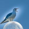 北浦の鳥たち-1