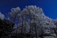 樹氷と星空