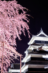 駒つなぎの桜と天守閣