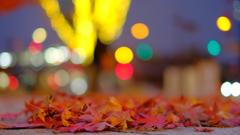 落ち葉とイルミ