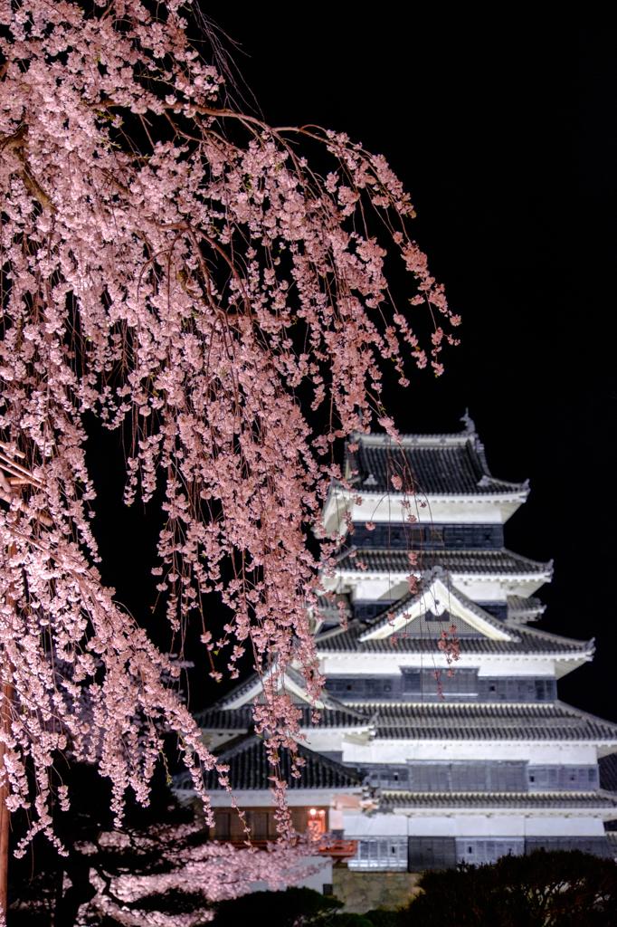 枝垂れ桜と天守閣