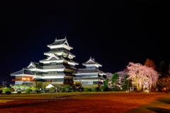 松本城と駒つなぎの桜