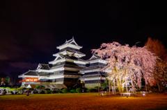 加藤清正公 駒つなぎの桜と天守閣
