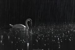 雨に打たれる