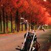 おしゃれな秋