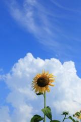 午後の夏空Ⅱ
