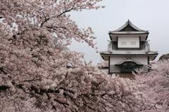 石川櫓と桜