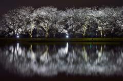 桜浪漫 in 富山県中央植物園