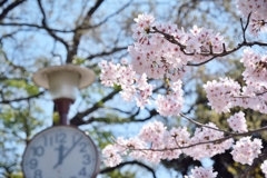 One spring day*