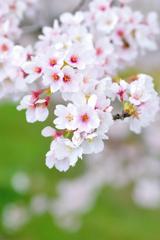 春の彩り 05