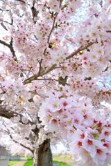 春の彩り 07