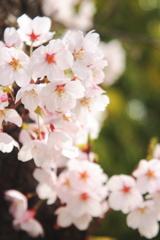 春の彩り 10