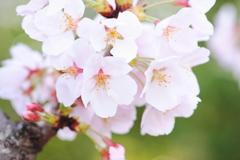 春の彩り 09