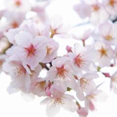 春の彩り 11