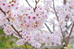 春の彩り 02