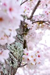 春の彩り 08