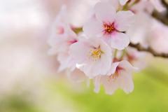 春の彩り 03