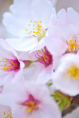 春の彩り 04
