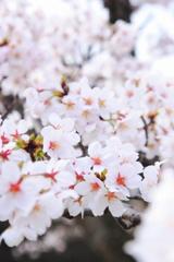 春の彩り 13