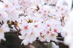 春の彩り 12