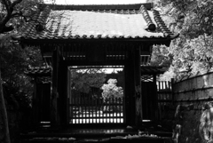寿福寺も雪化粧