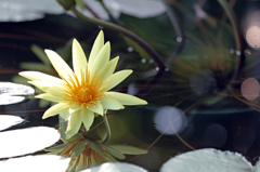 Miss water Lily.