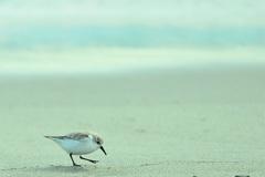 浜辺のメルヘン♪