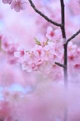 春のうらら