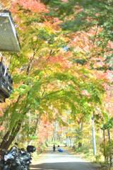 優しい秋の中で