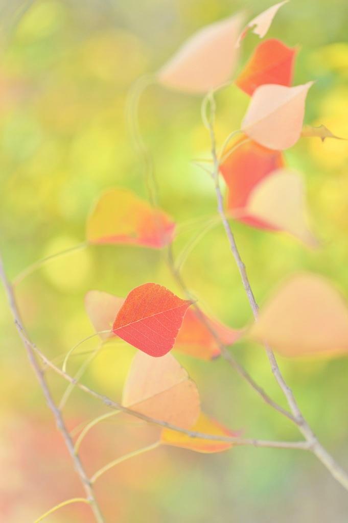 優しい秋の風
