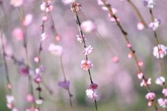 キラキラ春の日