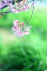 若草も花に萌え