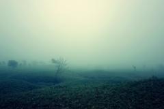 霧にぬれても