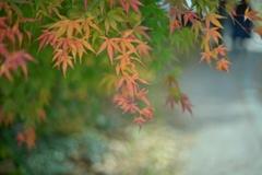 足元の秋♪
