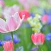 いろいろお花♪