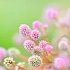 春色メモリー♪