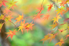 やさしい秋風