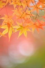 秋色キラリ