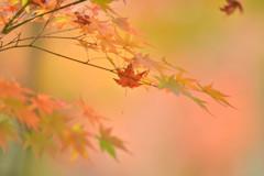 想い出は落ち葉とともに