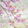 春風の誘惑