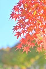 山も輝く秋