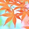 京の秋はあでやか