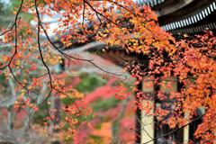 古都を飾る秋