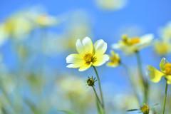 ときどきお花♪