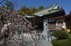 杉田 妙法寺と梅