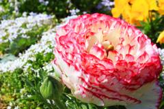久し振りの花