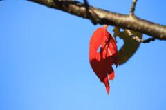 秋を探して