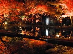 曽木公園2