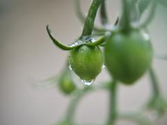 雨の日の庭3