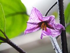 雨の日の庭1